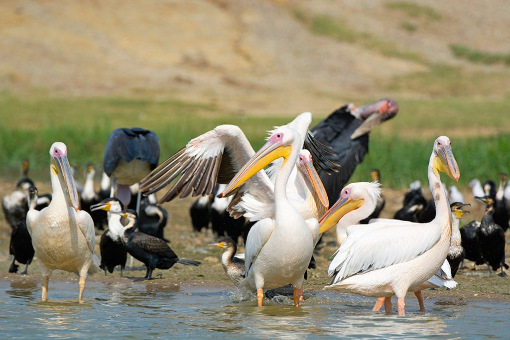 Birdlife in Kazinga Channel