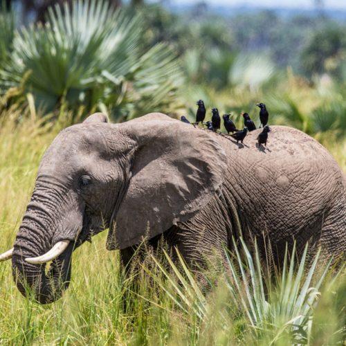 Uganda-Safar-Queen Elizabeth-Park