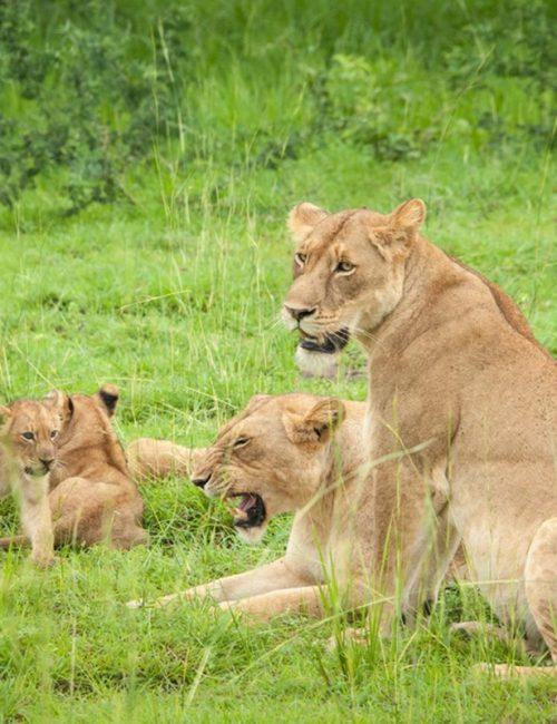 Uganda-Safari-Africa