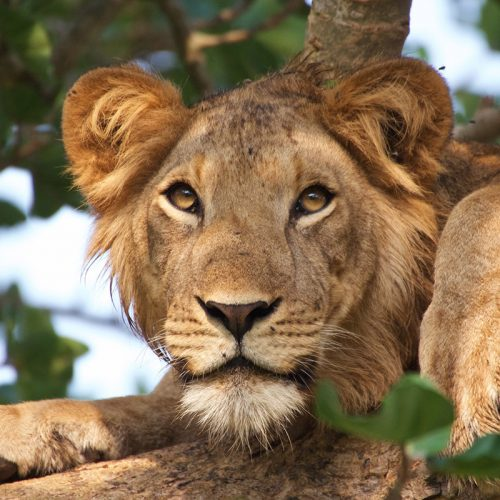 Rwanda-Safari-Holiday