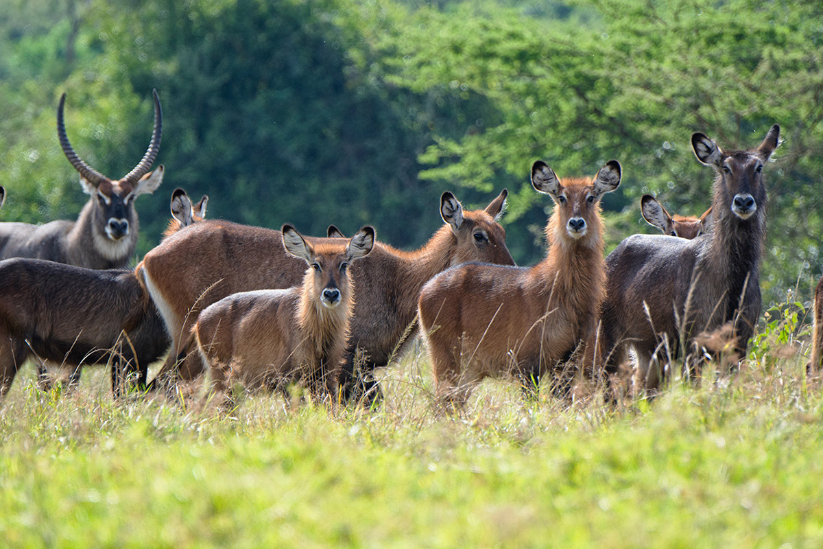 wildlife game drives