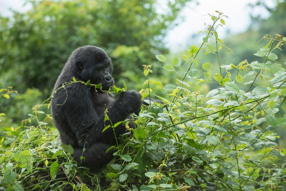 Nature Walks in Bwindi Forest