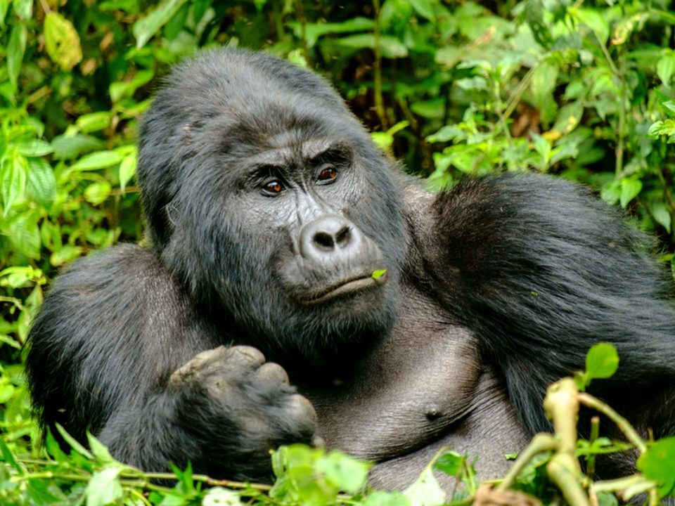 Book-gorilla-Tracking-uganda