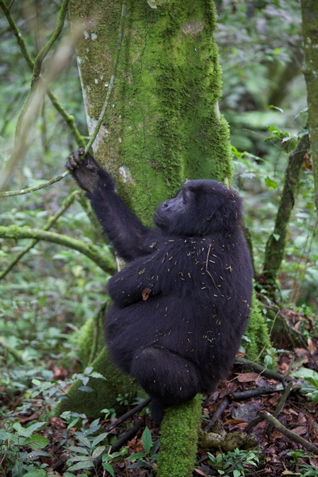 Gorilla-Tracking-Road-Trip