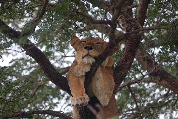 4-Day-Uganda-Wildlife-Safari