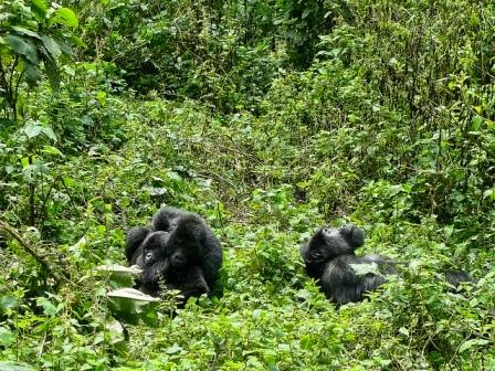 Gorilla-Tracking-Africa