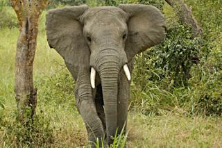 uganda-safari-highlight