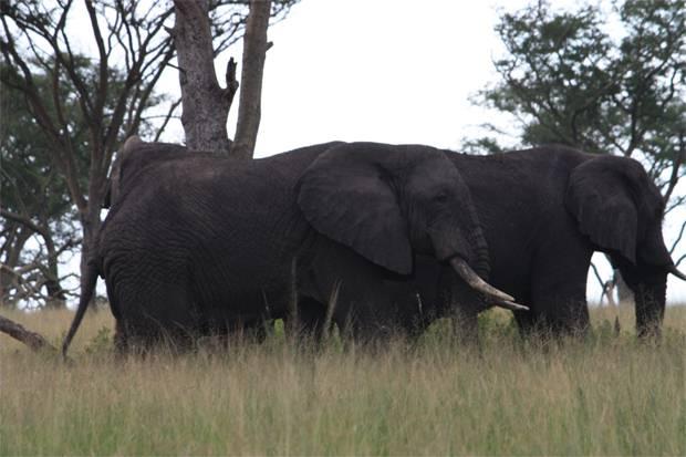 Uganda-Safari-Highlights