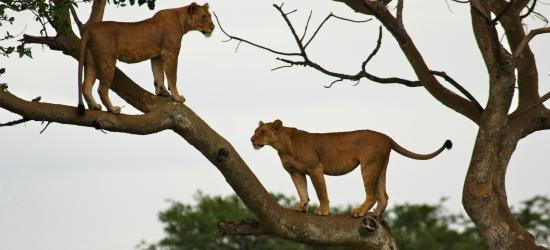 Uganda-Game-Safari-Africa
